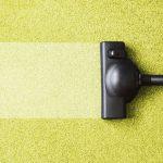 Какие виды паразитов и бактерий могут жить в ковре и что с этим можно сделать?